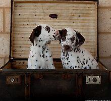 Dalmatian Puppies by Tawnydal