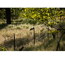 Birds on Fence in Meadow Photographic Print