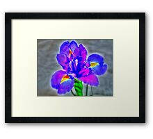 Flower in close up Framed Print