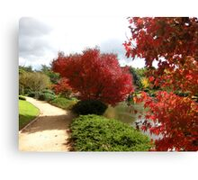 Red leaves on trees, Japanese gardens, Toowoomba Canvas Print