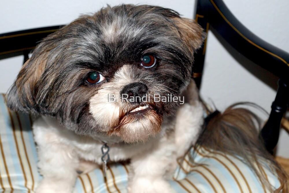 Chewie's pet dog by ♥⊱ B. Randi Bailey