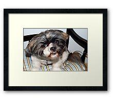 Chewie's pet dog Framed Print