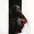 Peeking out the Doorway by Scott Engel