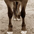 draft horse feet by QuietRebel