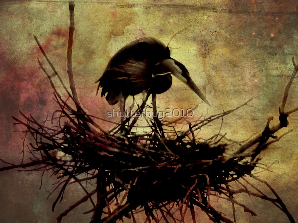 Dark Day on Heron Island by shutterbug2010