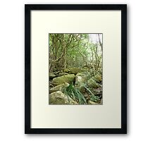 jungle_overgroth fighting for life amongst huge gree moss covered boulders Framed Print