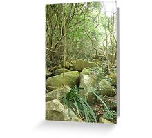 jungle_overgroth fighting for life amongst huge gree moss covered boulders Greeting Card