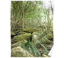 jungle_overgroth fighting for life amongst huge gree moss covered boulders Poster