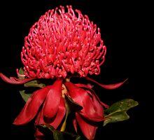 Aussie Icon by theaussie
