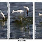 egret fishing triptych by Celeste Mookherjee