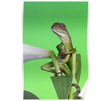 The Lounge Lizard Poster