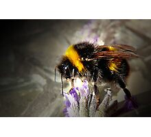 Just Bumble Photographic Print