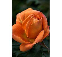 Rose of  Orange Photographic Print