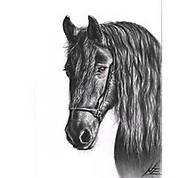 Black Pearl - Friesian Stallion Photographic Print