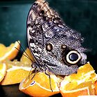 Butterfly on Fruit by Laurast