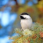 Chickadee In a Tree by Laurast