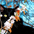 Black Cat In the Tree by Laurast