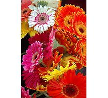 Gerberas gerberas shining bright Photographic Print
