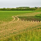 S-curve in the patato field by Adri  Padmos