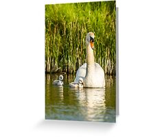 Wild Mute Swan with Cygnet's Greeting Card