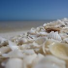 Shell Beach - Western Australia by nervouspilchard