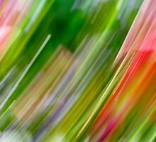 a rain of colors by lensbaby