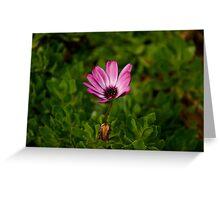 Lone flower, Flagstaff Gardens, Melbourne Greeting Card
