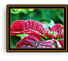 Poinsettia (pinhead sized dewdrops) Canvas Print