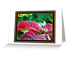 Poinsettia (pinhead sized dewdrops) Greeting Card