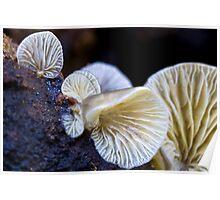 Fungi Season 1110 Poster