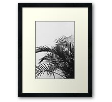 Palm B/W Framed Print