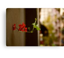 Nature in the city, Melbourne Canvas Print