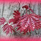 Young red leaves by daffodil