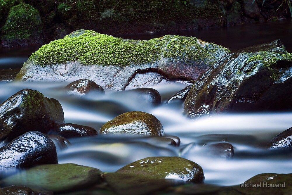 Moss Liberation by Michael Howard