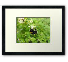 Bumbling Bumble-Bee Framed Print