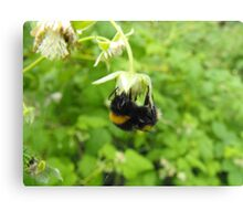 Bumbling Bumble-Bee Canvas Print
