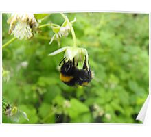 Bumbling Bumble-Bee Poster