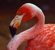 Flamingo Intense by Denise N Young