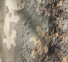 Trees of Trinity College Dublin, London Plane Bark by Aisling Walsh