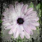 Wild Flower by Victoria limerick