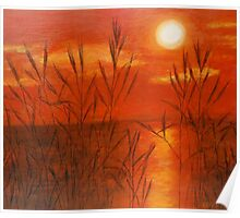 Sunset with reeds Poster
