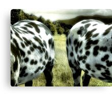Two Sides Of The Same Horse Canvas Print