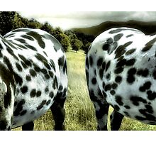 Two Sides Of The Same Horse Photographic Print