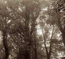 Woodland by Iceangel