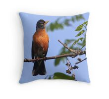 Male American Robin Throw Pillow