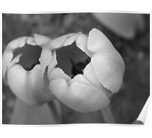 Two Tulips - Black and White Poster