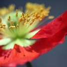 Velvet Red by Olivia Moore