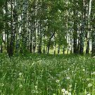 In the birch-dandelion forest by VallaV