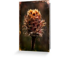 Desiccated Knapweed Greeting Card
