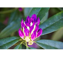 Purple Flower from Doxford Park 2 Photographic Print
